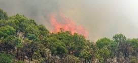 تاول تغییر اقلیم برتن جنگل