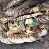 مرگ پلاستیکی