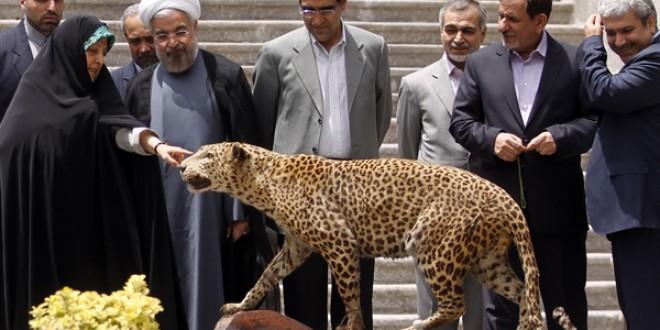 آقای روحانی «محیطزیستیترین دولت» برازنده شما نیست