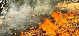آتش غفلت در جنگل