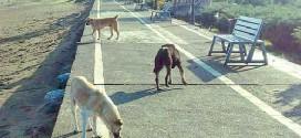 دوستی خالهخرسه با حیوانات