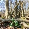 جنگل میخواهد زنده بماند
