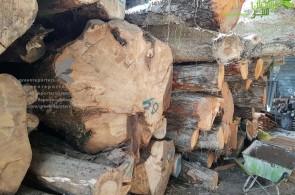 جنگل ملی یا منافع میلی!