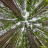 ۳,۰۰۰,۰۰۰,۰۰۰,۰۰۰؛ تعداد درختان جهان