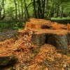 تبر به ریشههای جنگل رسید