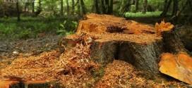 جنگل به جیبان!