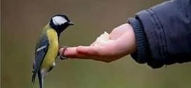 با پرندگان آشتی کنیم