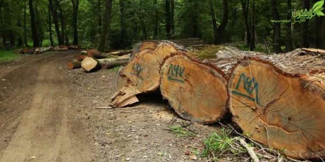 جنگل را سد میزنند