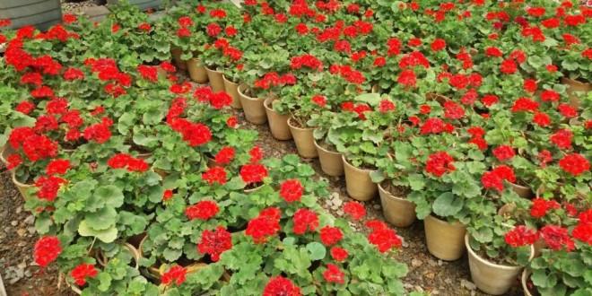 گلهایی به رنگ تابستان