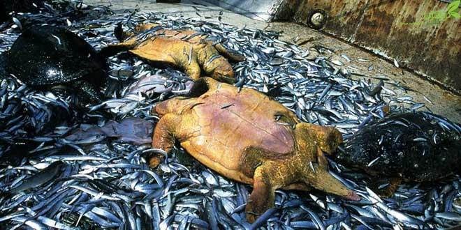 بیتوجهی شیلات به منابع دریایی