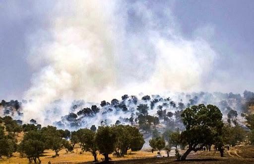 سازمان جنگلها با آتش همدست است