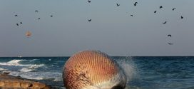 محیط زیست دریایی، محیط زیست فراموشی